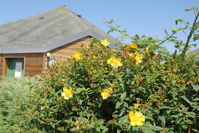 Pavillons extérieurs fleurs