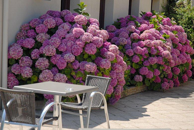 Terrasse arrière rhododendron